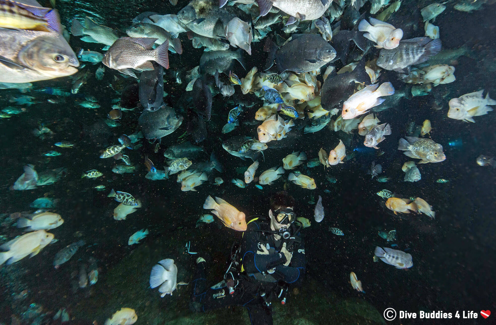A Fish Tornado In The TODI Scuba Diving Facility In Belgium, Europe