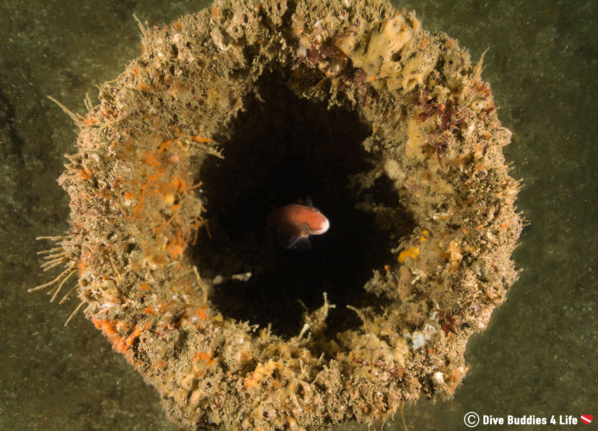 A Fish In The Barrel Of A Gun From A Sunken Normandy Shipwreck, France