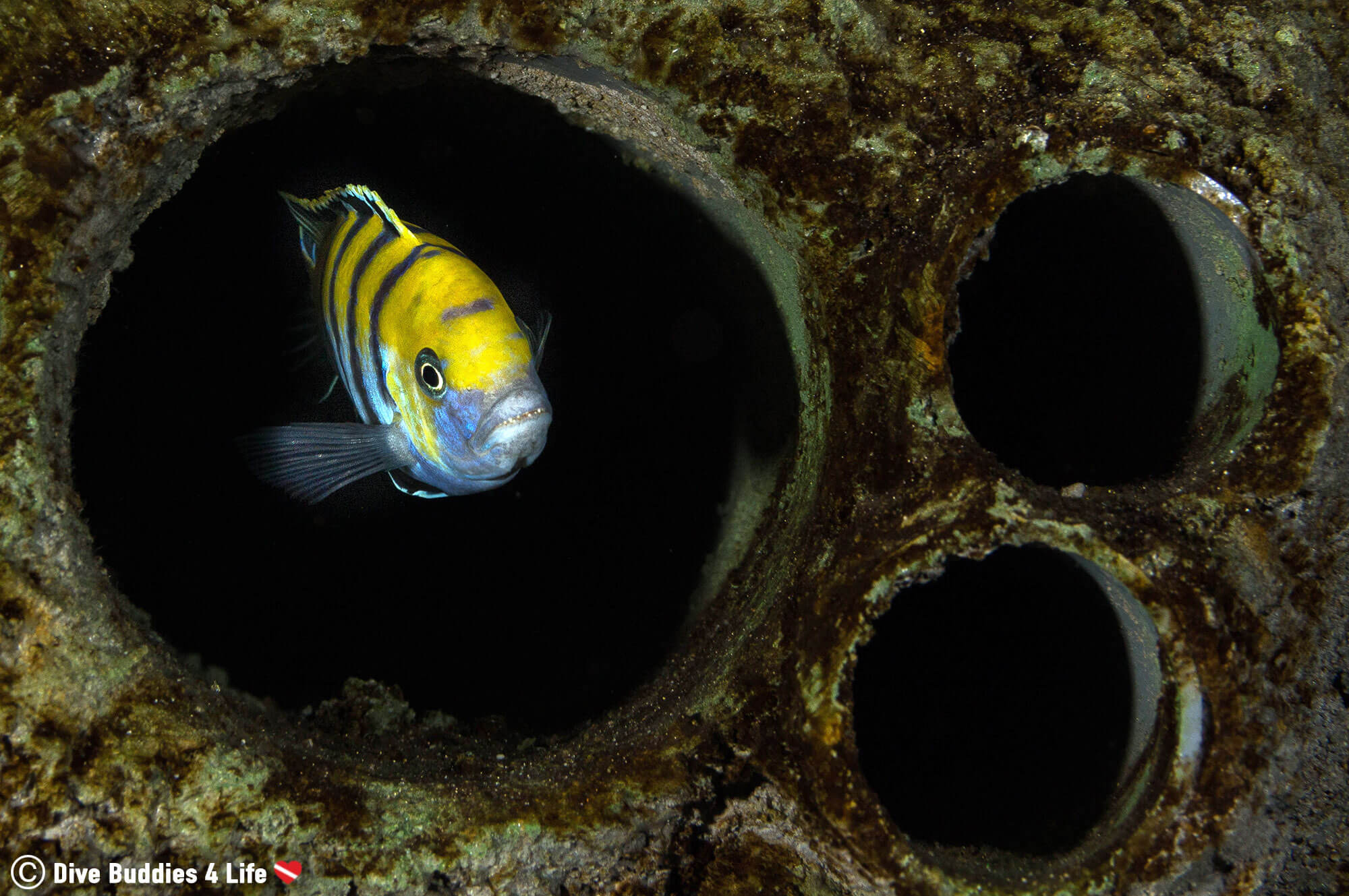 A Freshwater Fish In One Of The Pipes Of Todi The Dive Aquarium In Belgium, Europe