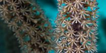A Macro Photograph Of A Piece Of Soft Coral In Bonaire, Underwater Photography Guide