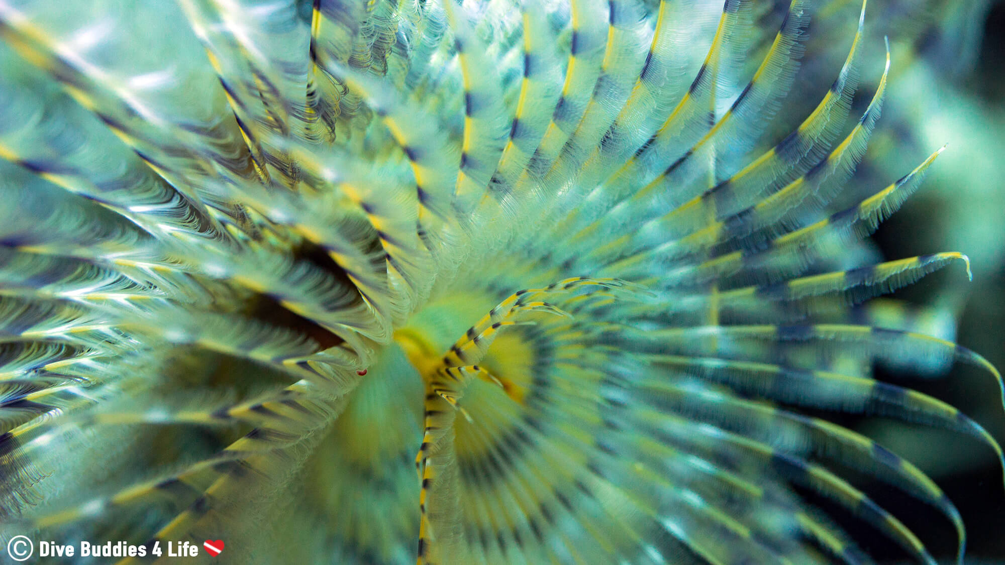 A Macro Shot Of A Tube Worm In Dubrovnik, Croatia, One Of Europe's Balkan Countries