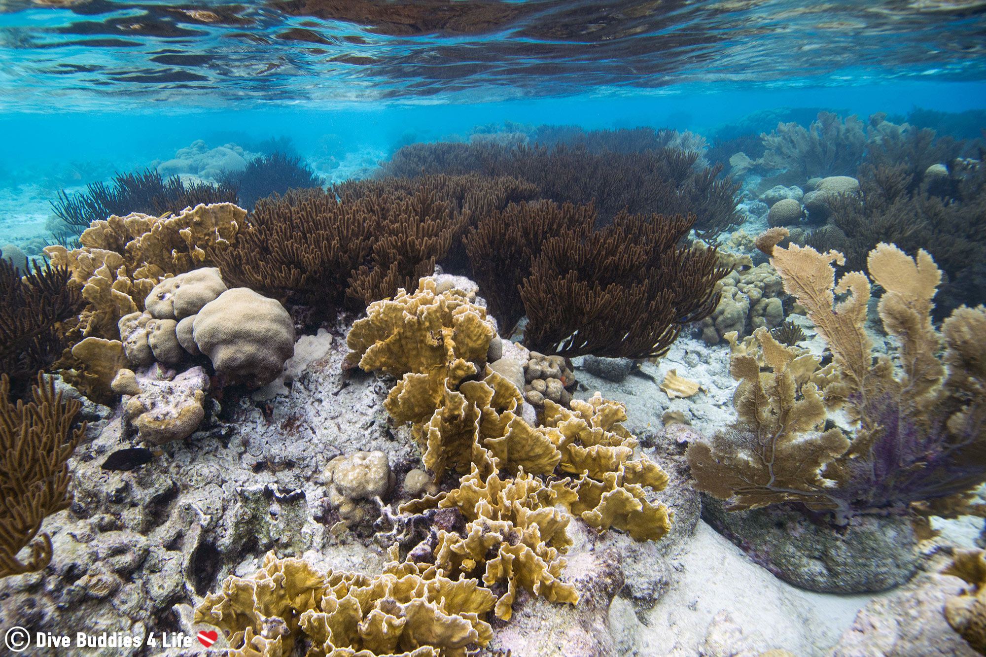 A Shallow Coral Reef On Klein Bonaire, Dutch Caribbean