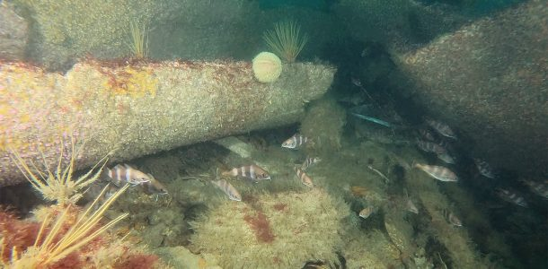 A Shipwreck In Brest With A School Of Fish, France Scuba Diving, Europe