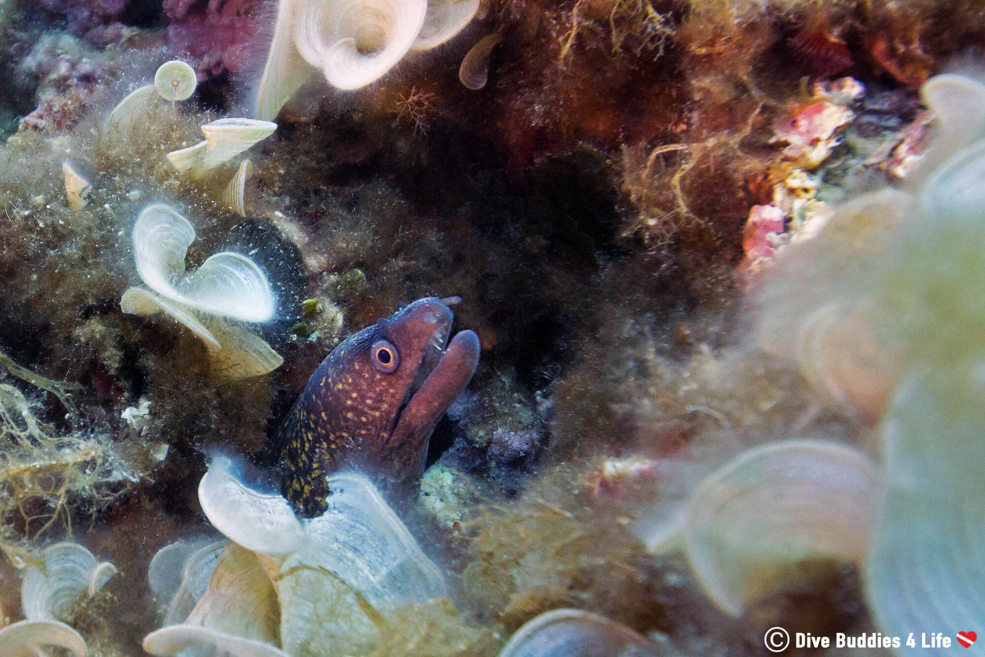 A Small Moray Eel On The Mediterranean Sea Floor In Budva Montenegro, Scuba Diving Europe's Balkan Countrie