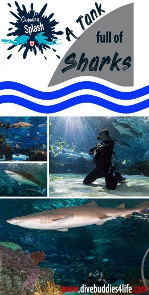 A Tank Full Of Sharks In Toronto, Ontario, Scuba Diving Canada
