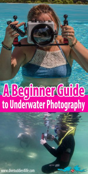 A Dive Buddies Beginner Guide To Underwater Photography