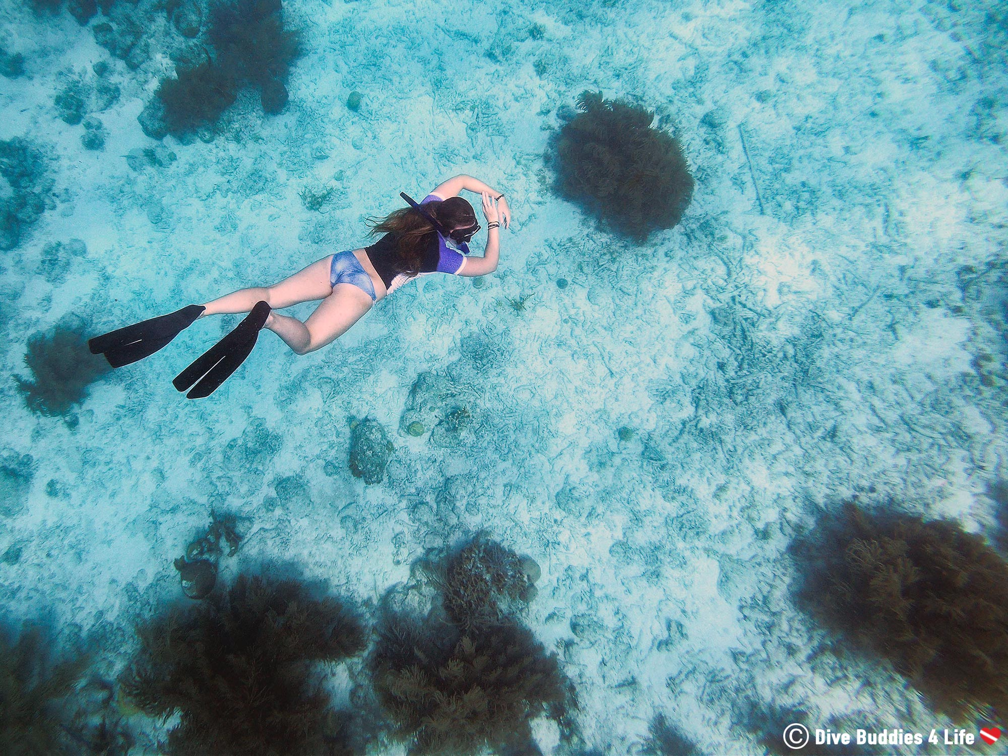 Ali Diving Down To The Bonaire Soft Coral In The Shallows, Dutch Caribbean