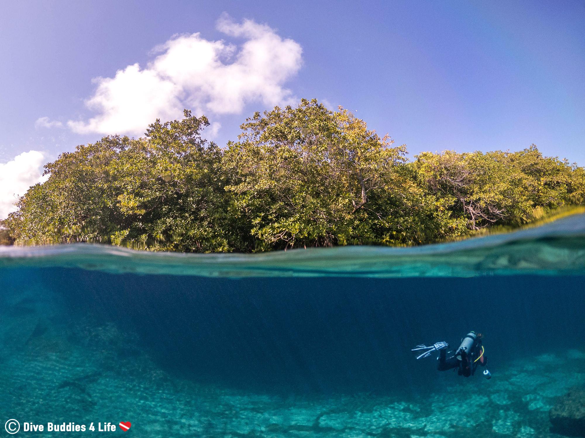 Ali Diving Into The Mangroves Of Casa Cenote In Tulum, Cavern Scuba Diving In Mexico