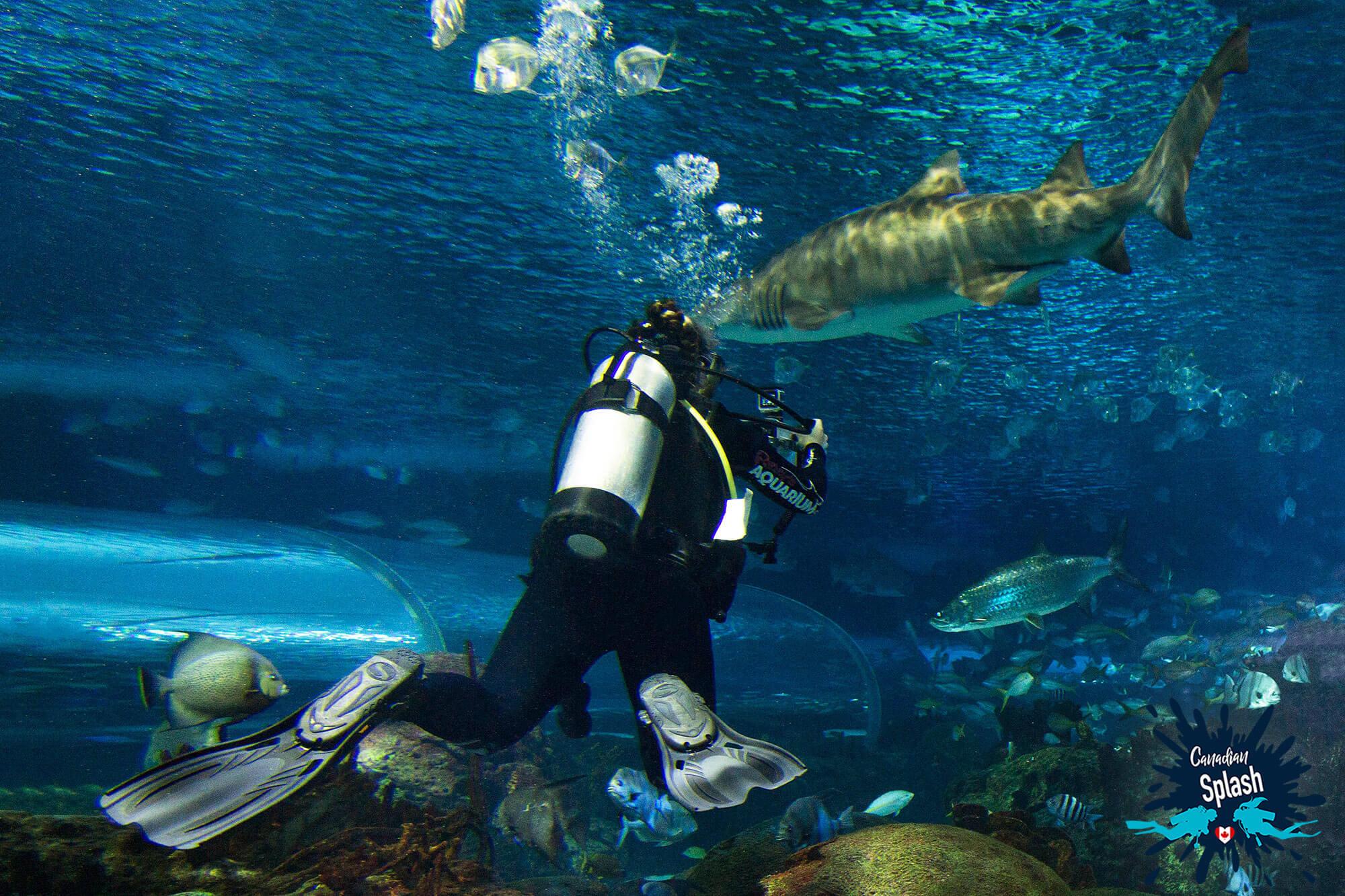 Ali Filming A Shark In The Dangerous Lagoon Tank At Ripley's Aquarium Of Canada, Ontario Scuba Diving, Canada