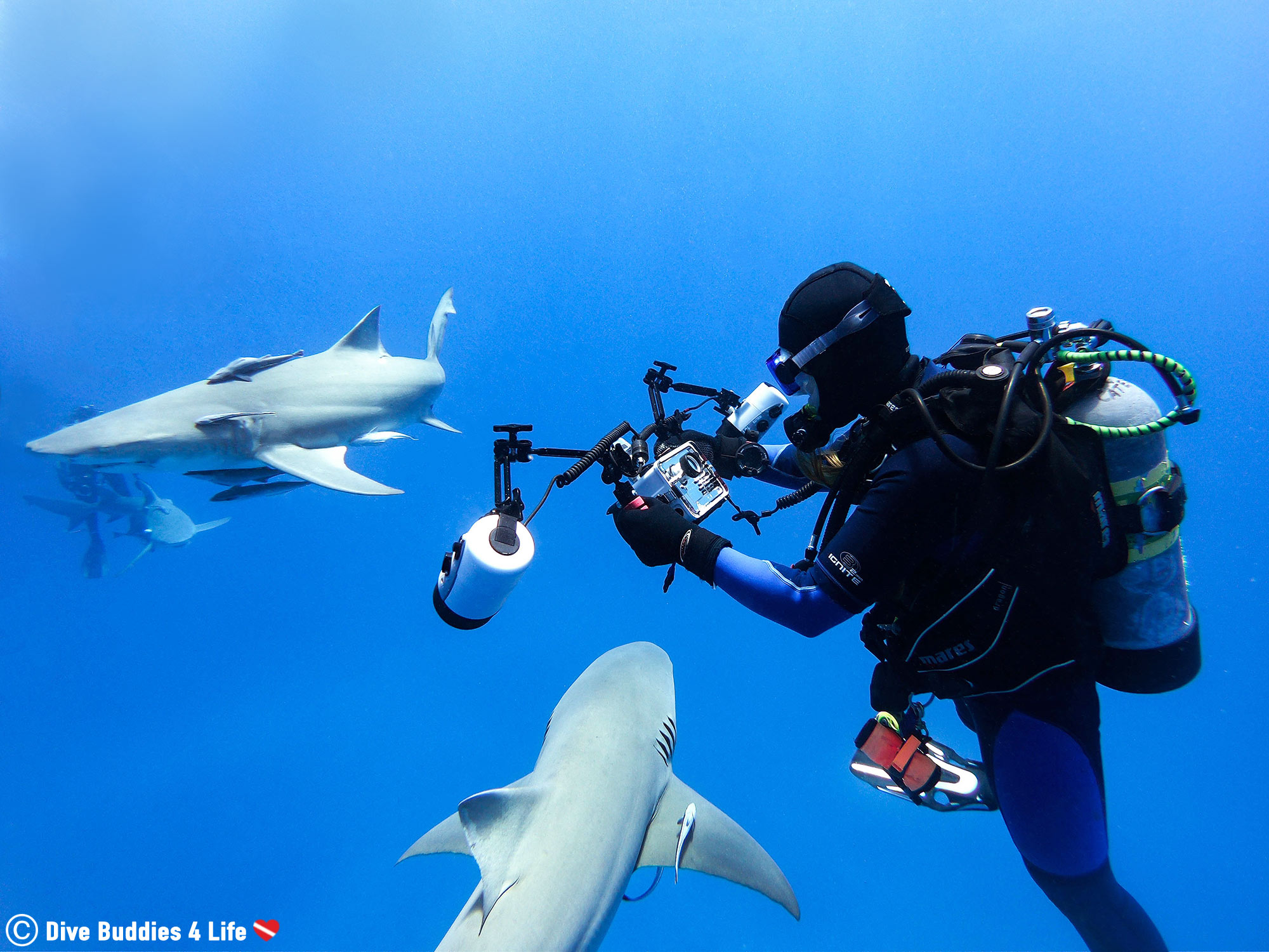 Ali Holding On To Her Camera At A Safety Stop In Jupiter, Florida, Scuba Diving With Sharks