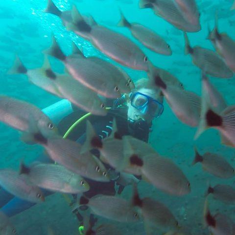 Ali Scuba Diving and Peeking Through the School of Fish