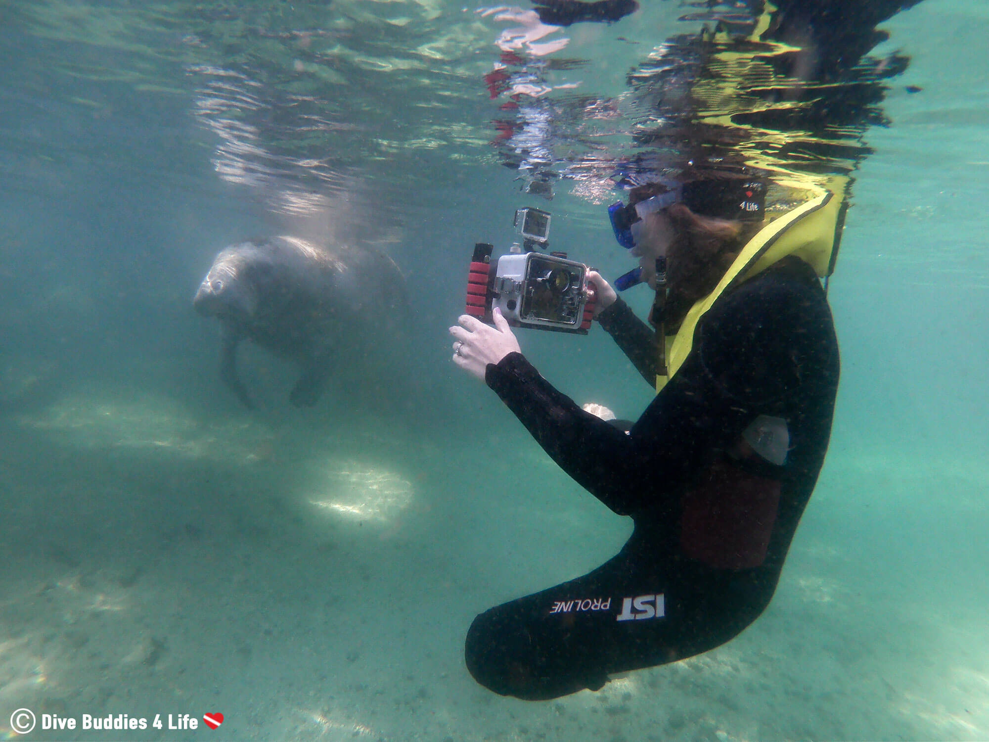 Ali Photographing And Videographing A Manatee In Three Sisters Springs, Florida