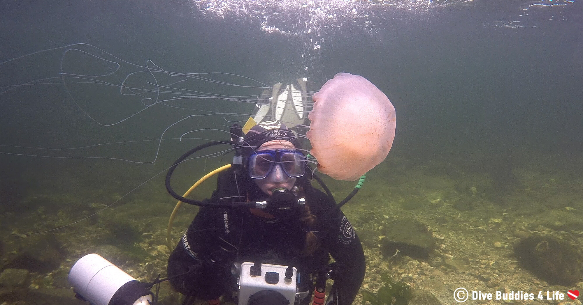 Ali Scuba Diving With A Jellyfish In The Netherlands Salt Water Lake, Europe