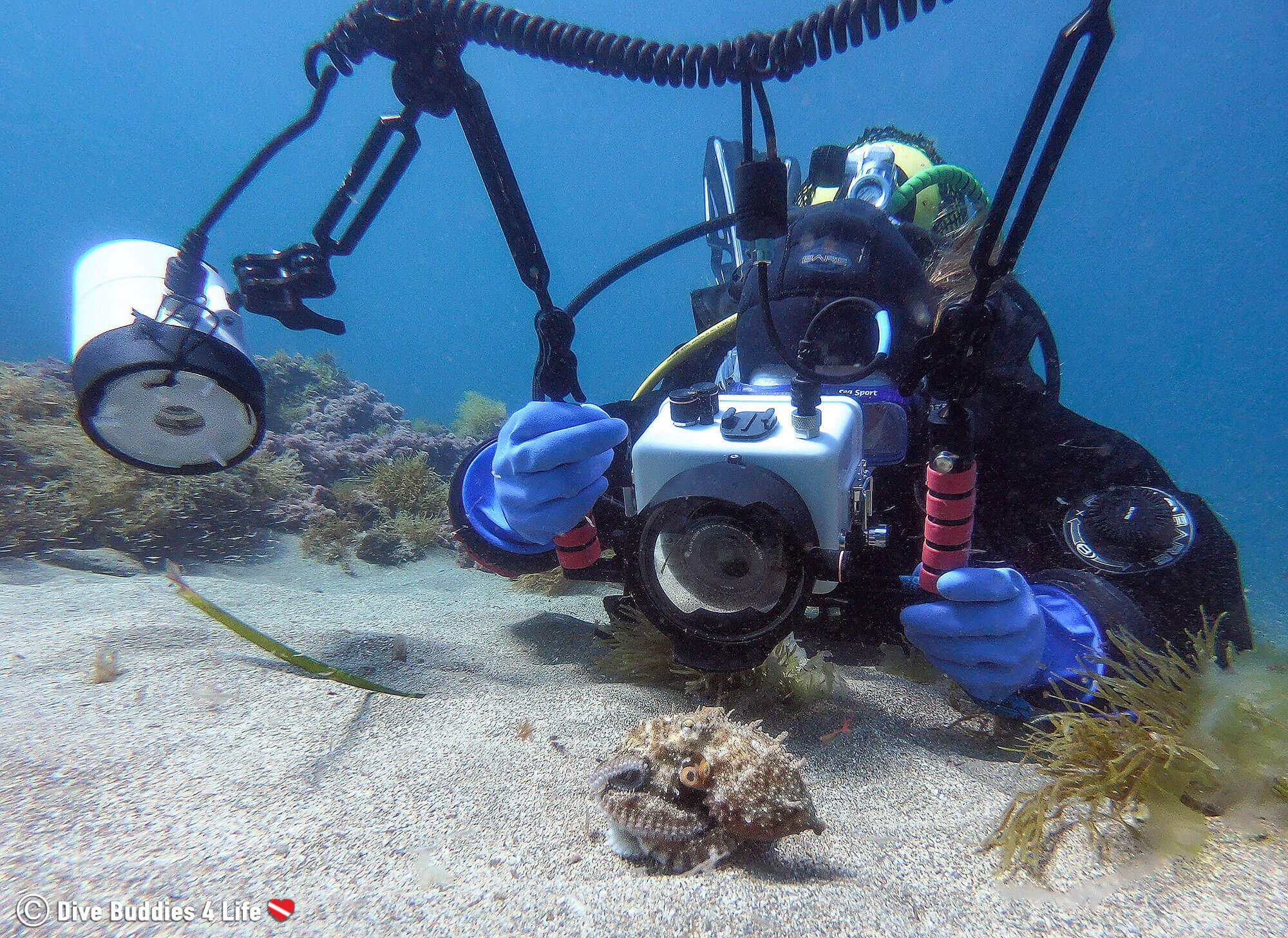 Ali Scuba Diving from the Shore In Spain And Photographing A Small Octopus On The Bottom