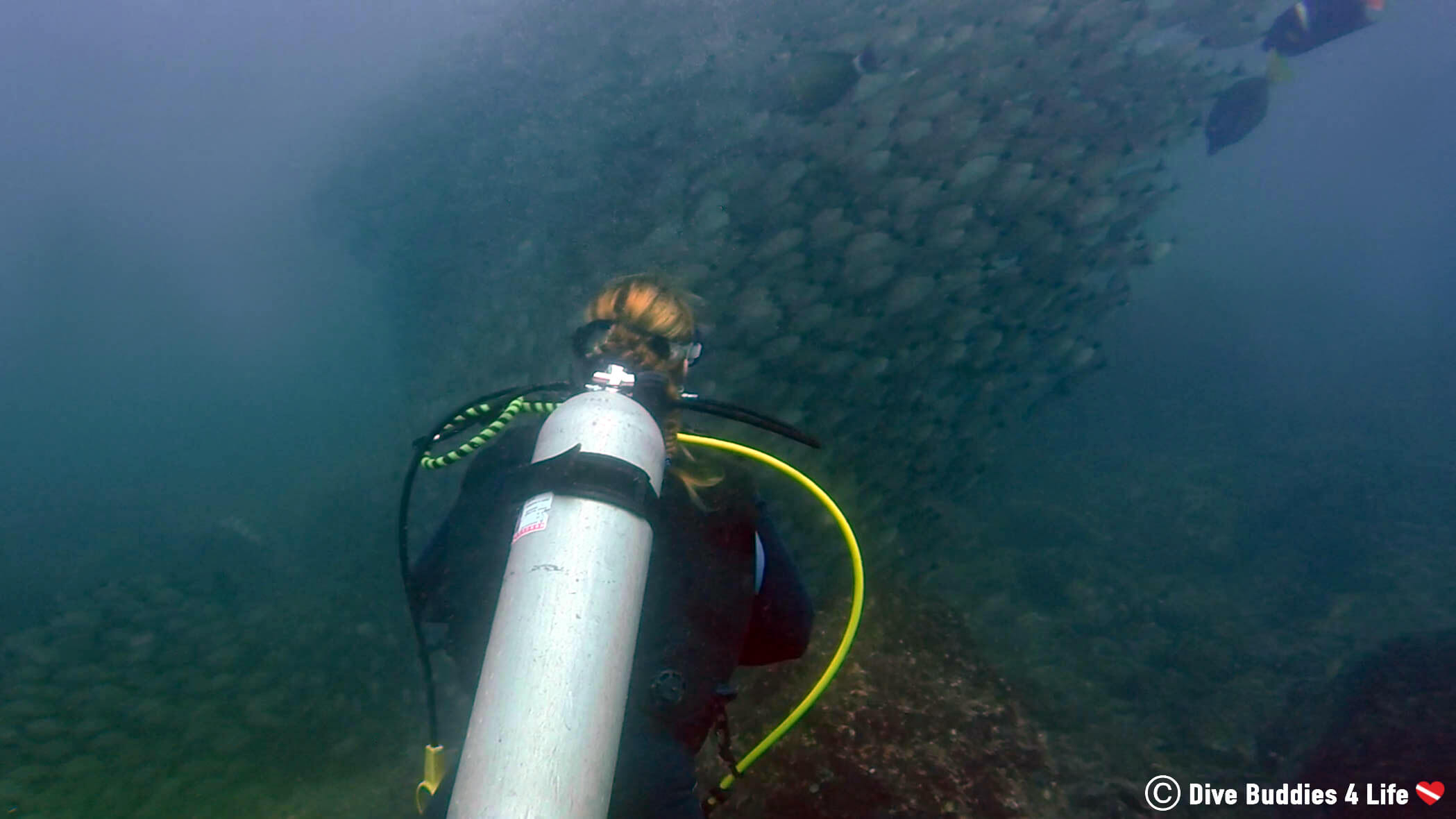 Ali Scuba Diving Into A Fish Tornado At The Catalina Islands In Costa Rica, Central America