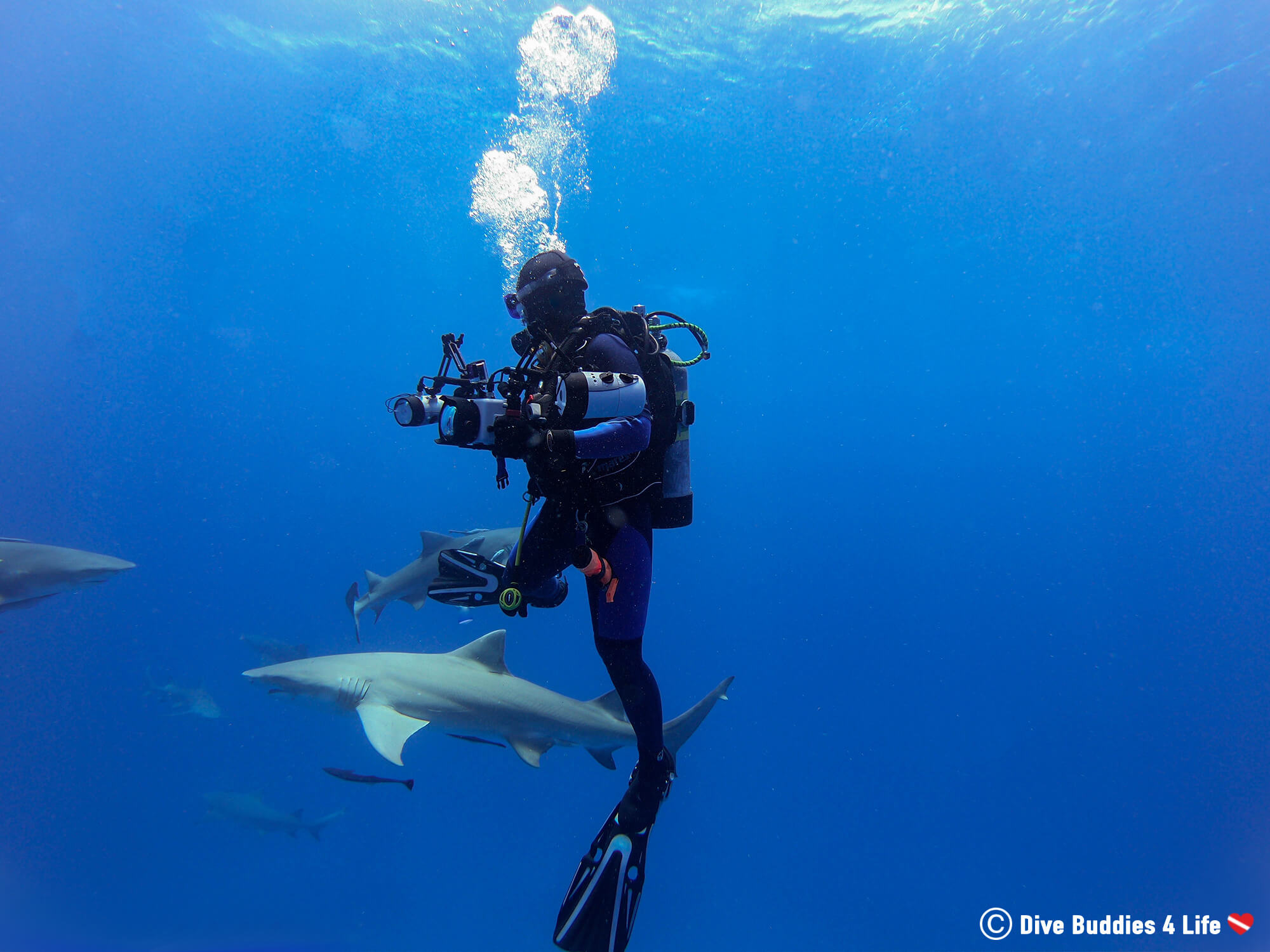 Ali Scuba Diving With Sharks In Jupiter, Florida, USA