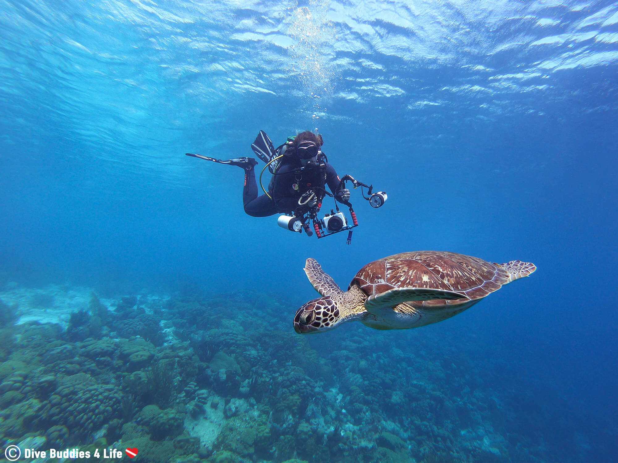 Ali Scuba Diving With A Green Sea Turtle At The Karpata Dive Site On Bonaire, Netherlands