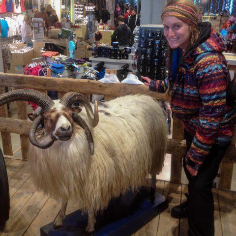 Ali and Stuffed Sheep
