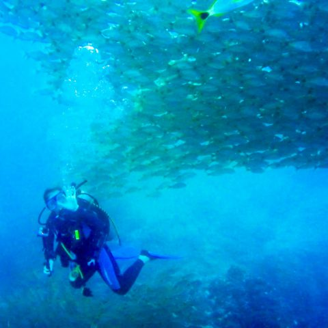 Ali Scuba Diving with the Wall of Fish at Bat Islands, Costa Rica