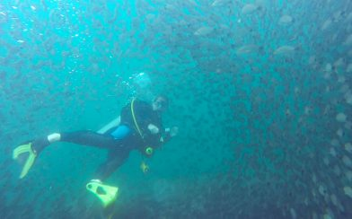 Ali Scuba Diving in the Millions of Fish of Catalina Islands
