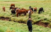 Ali with Icelandic Horses