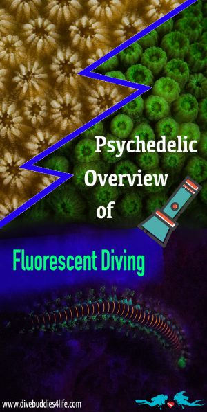 An Overview Of Fluorescent Scuba Diving