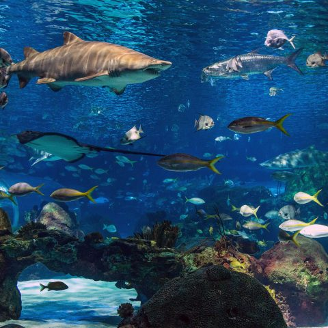 An Overview Of The Dangerous Lagoon Shark Tank At Ripley's Aquarium Of Canada, Ontario