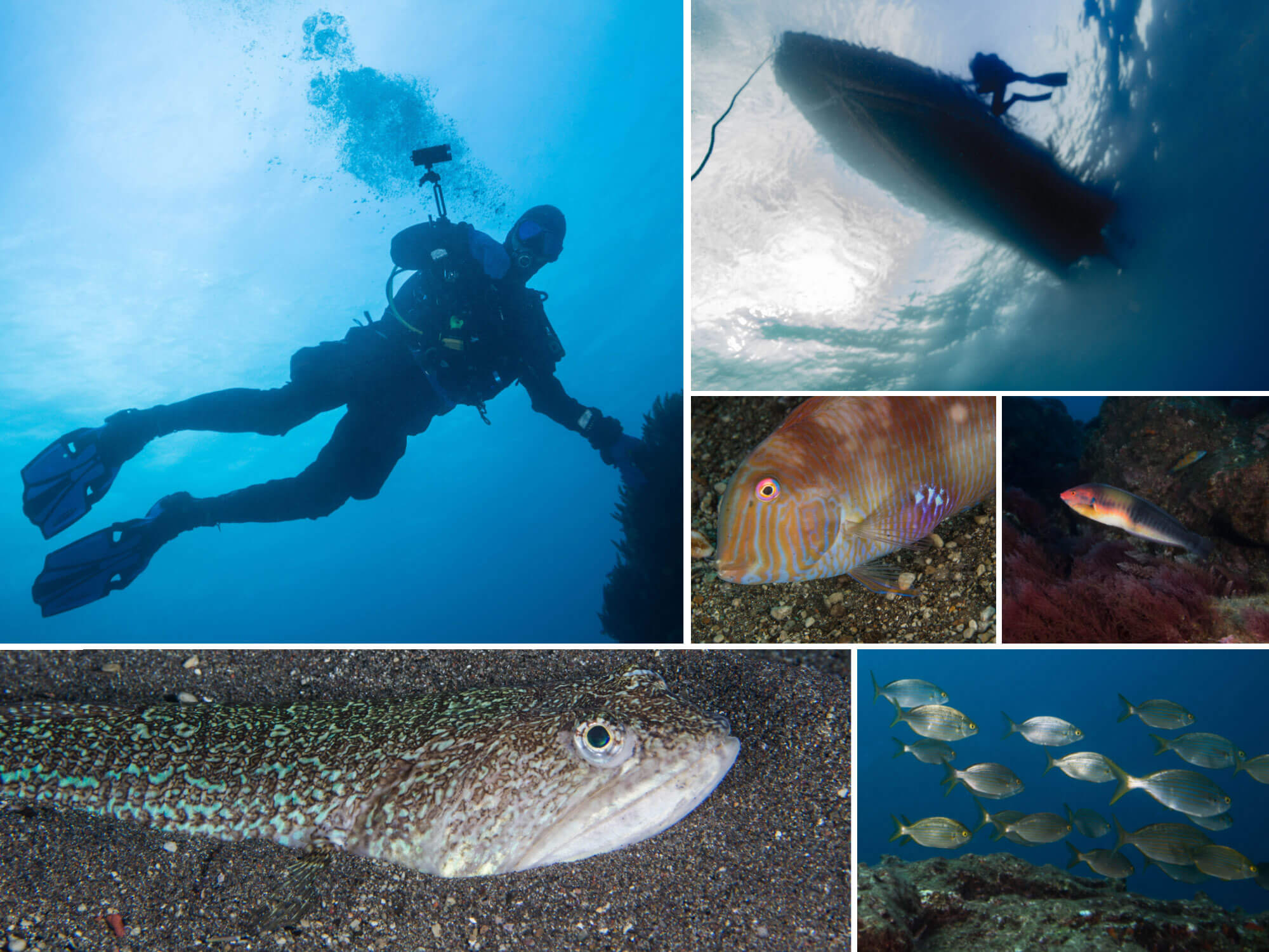 A Mosaic of the Excellent Diving in the Azores