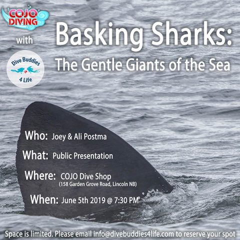 Basking Shark Presentation COJO Newsletter