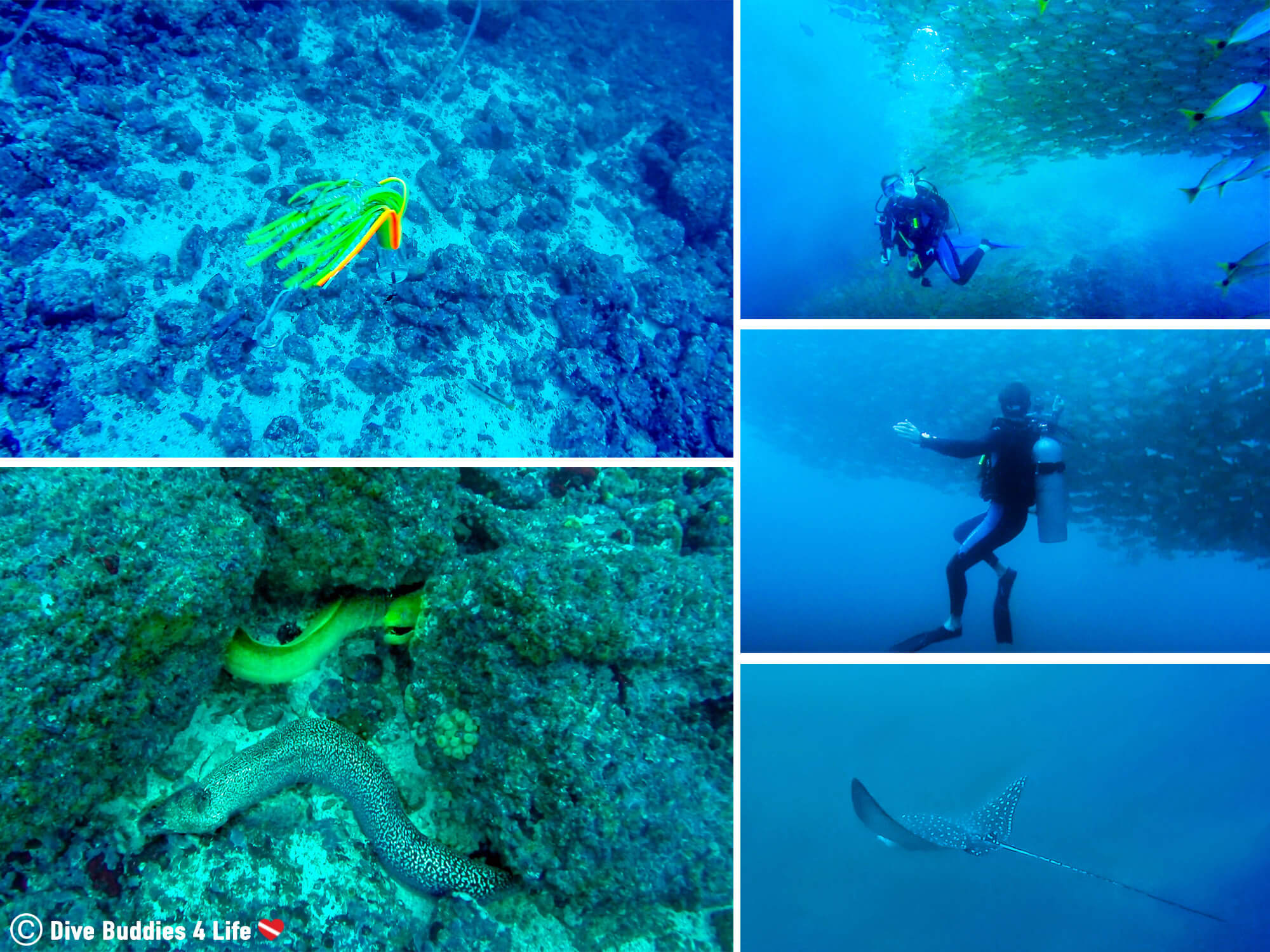 Bat Islands Marine Fauna Sightings While Scuba Diving In Costa Rica