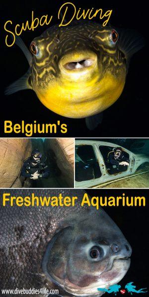 Belgium's Freshwater TODI Dive Aquarium, Pinterest