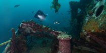 Bell Island Newfoundland Shipwreck Scuba Diving, Canadian Scuba Locations