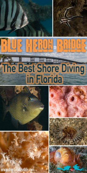 Blue Heron Bridge Florida Pinterest