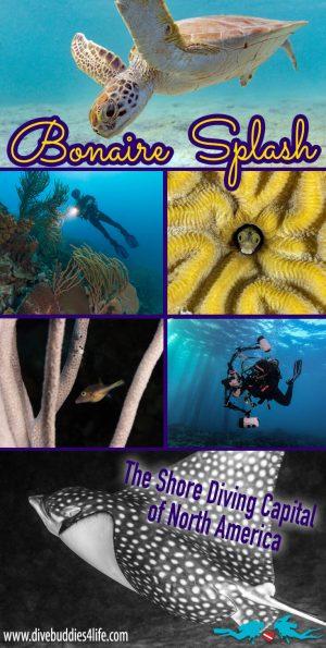 Bonaire Splash Scuba Diving Pinterest