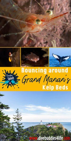 Bouncing Around Grand Manan's Kelp Beds, Canadian SSplash Scuba Diving Canada
