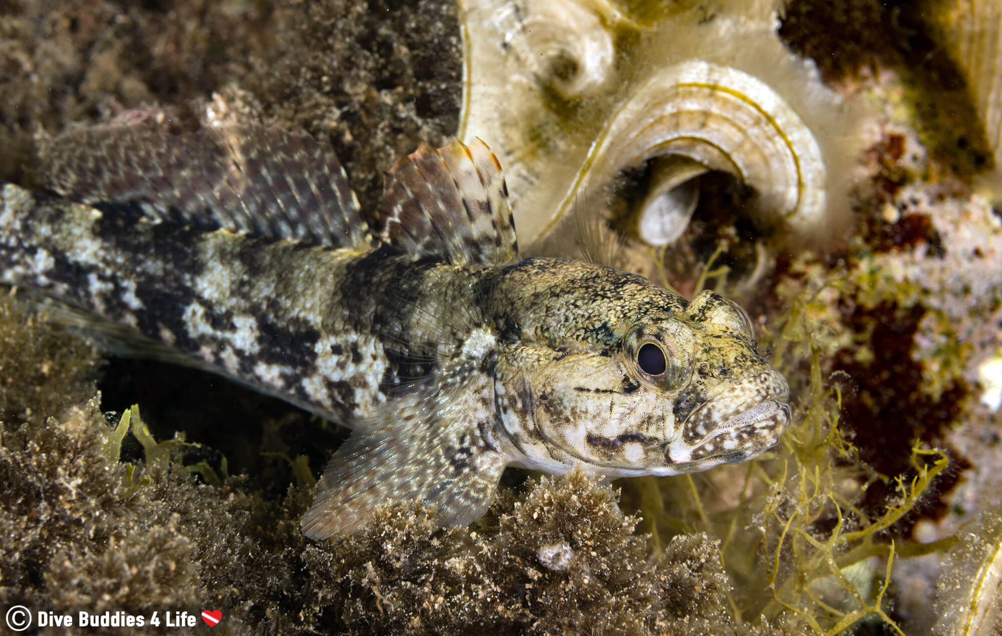 Camouflaged Spanish Fish See Scuba Diving On The Costa Brava, Europe