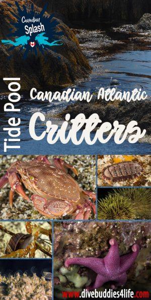 Canadian Atlantic Tide Pool Critters Pinterest
