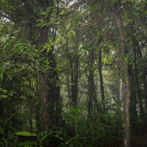 Cloud Forest Scenery