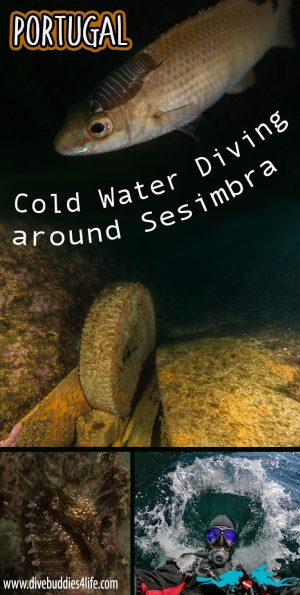 Cold Water Diving In Sesimbra Portugal Pinterest