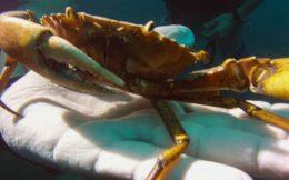 Crab Really Close Up