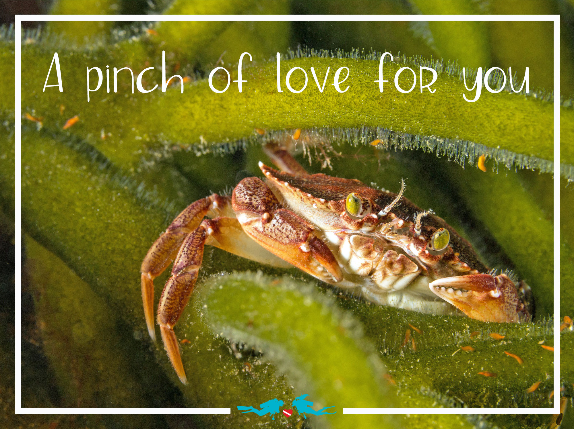 Crab Valentine's Day Scuba Diving Quote