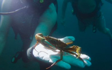 Apoyo Crab in the Hand of the Divemasters