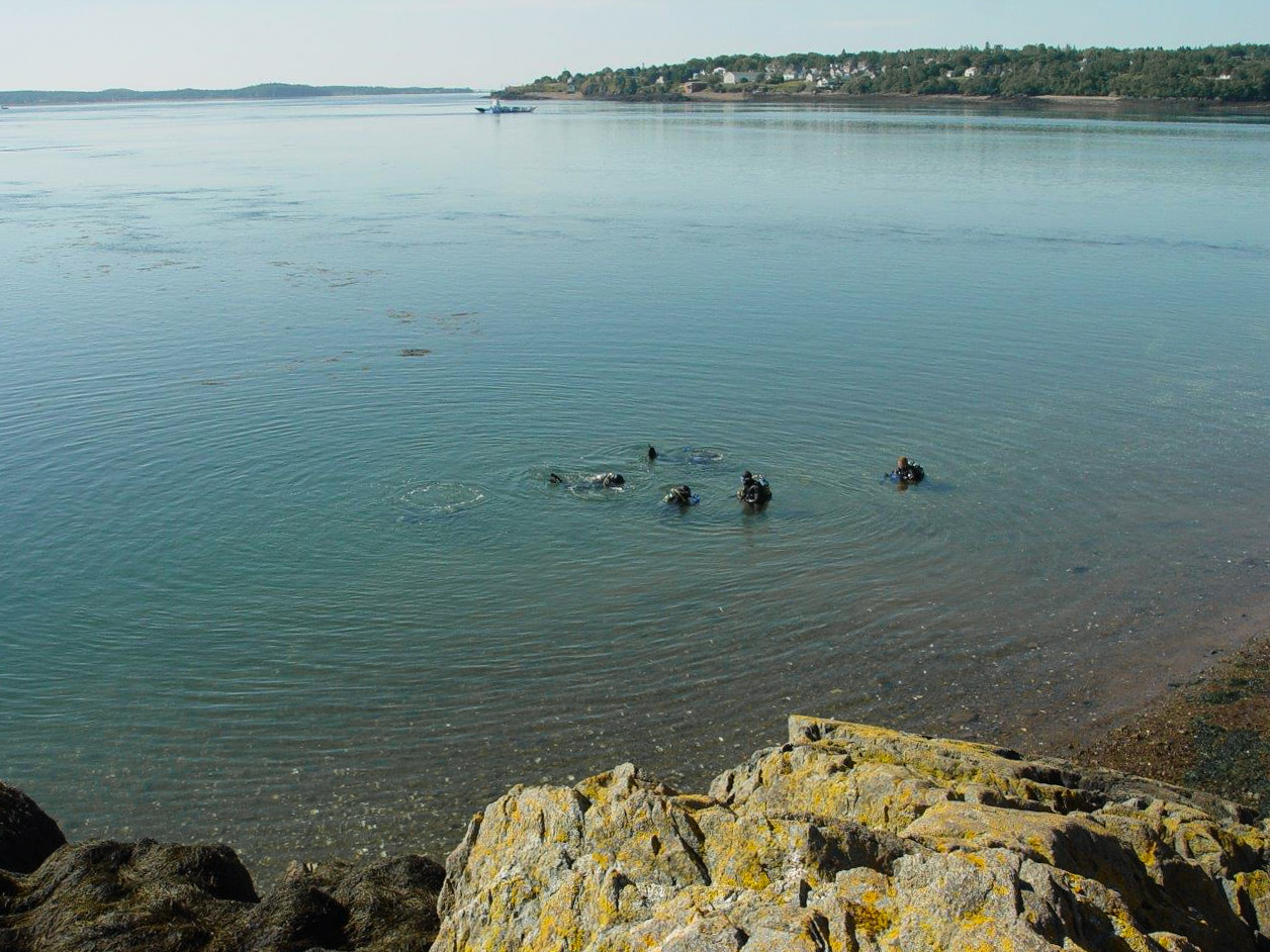 A Group of Scuba Divers Diving in the Bay of Fundy, Deer Island