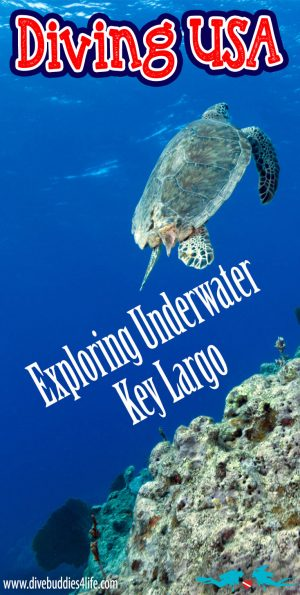 Diving USA Exploring Key Largo Underwater Pinterest
