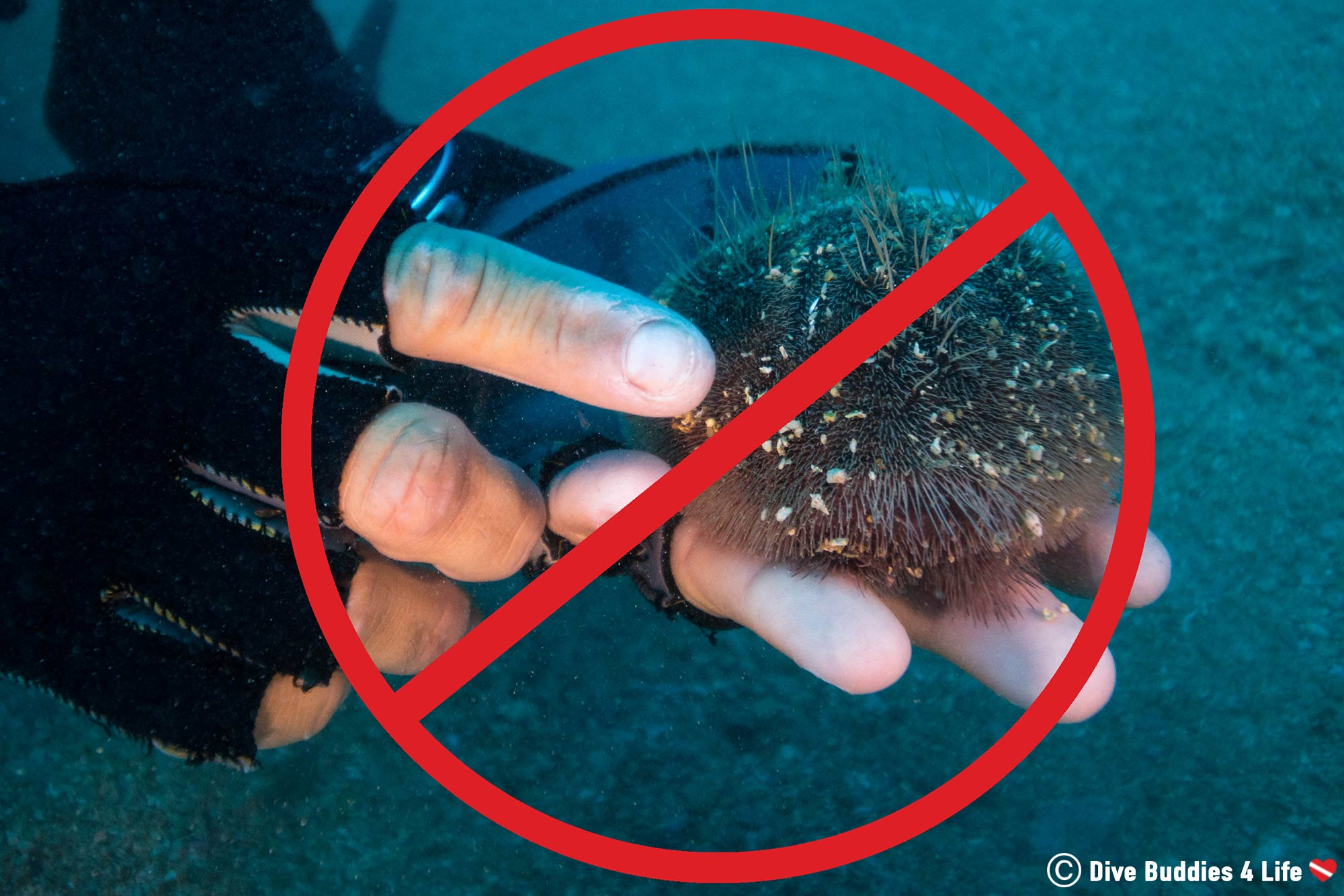 Don't Touch The Creatures, A Hand Holding And Touching A Sea Urchin