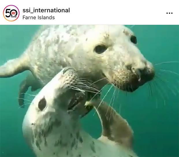 Farne Island Seals SSI Instagram Social Media Feature