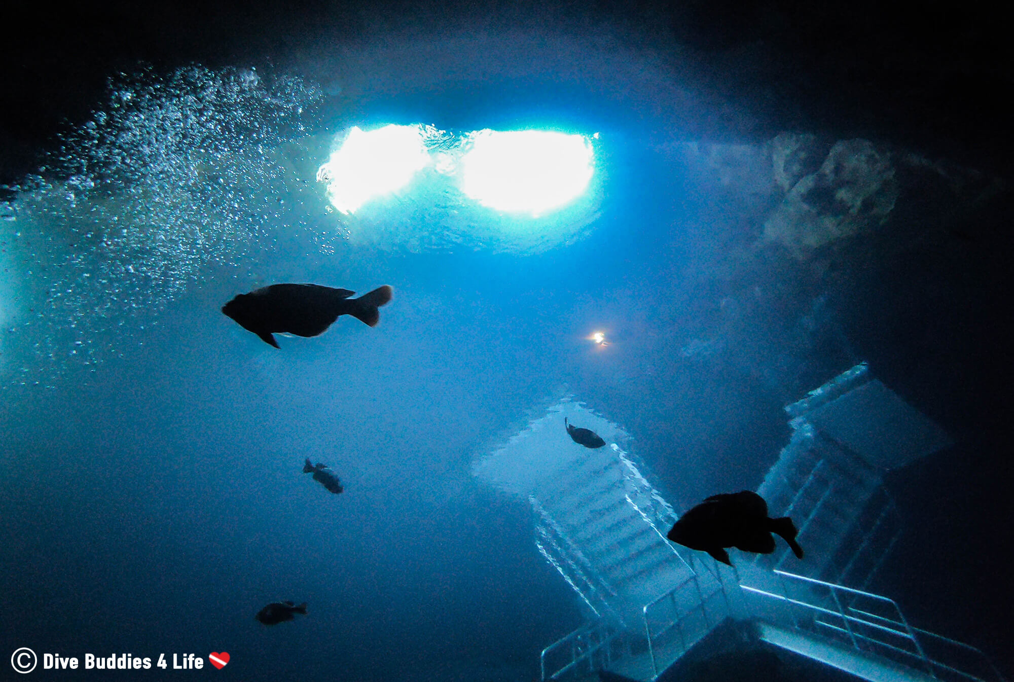 Fish And Devil's Den Stairs Silhouette From Under The Water, Florida, USA