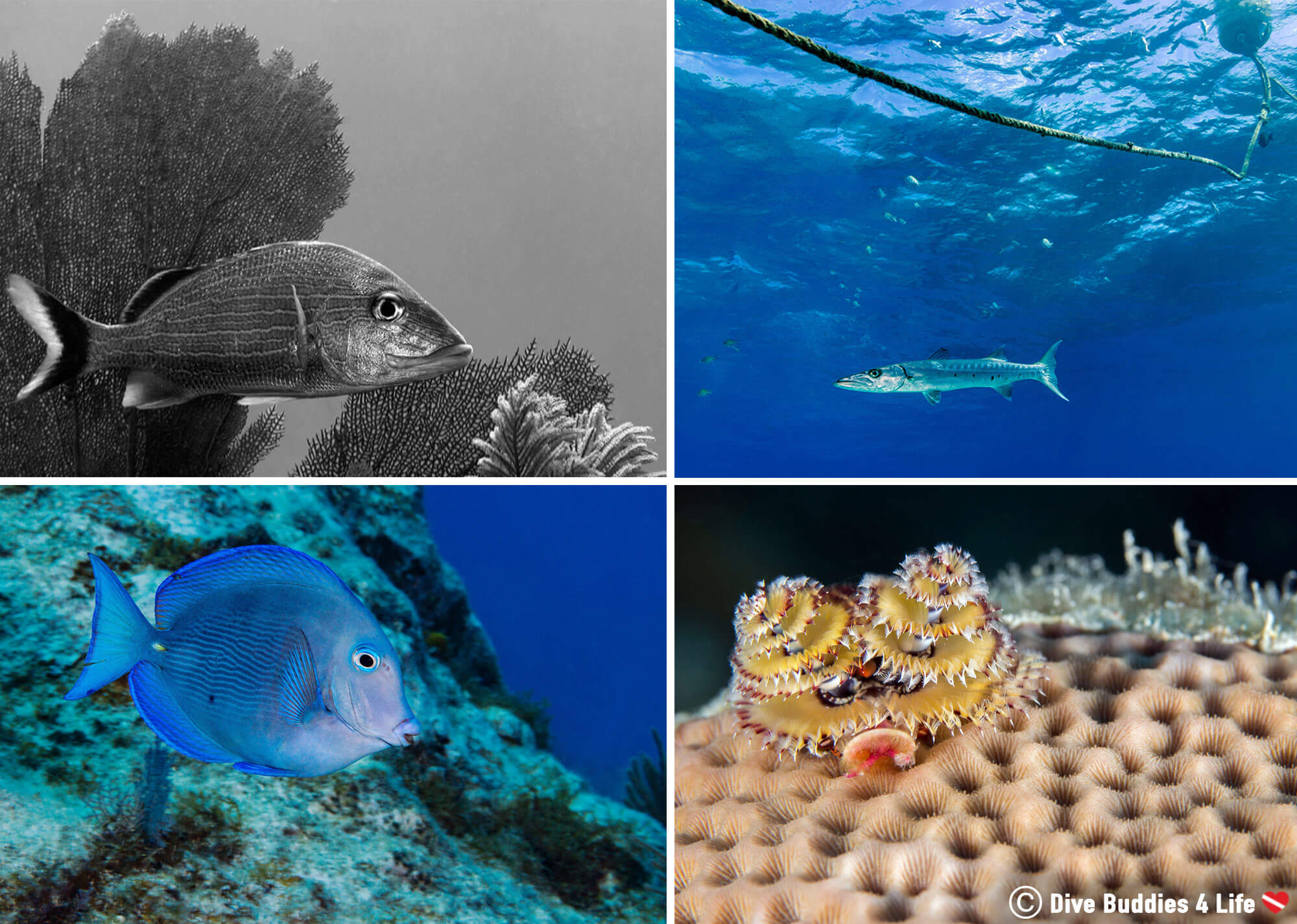 Florida Keys Scuba Diving Mosaic, Key Largo, South Florida, USA