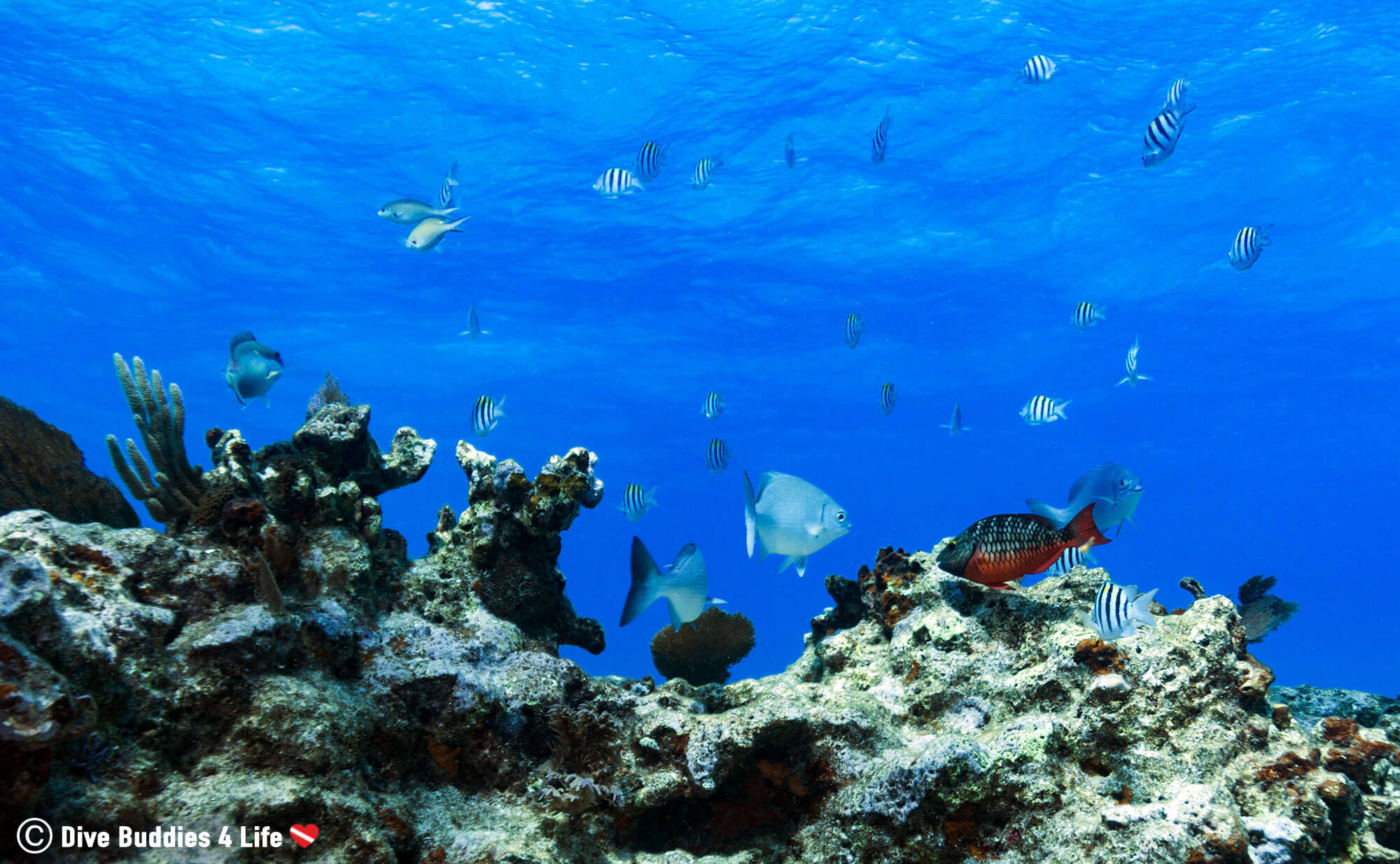 French Reef In The Florida Keys, Key Largo, USA