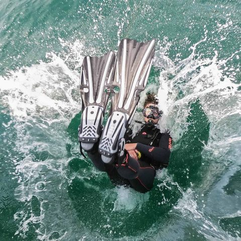 Fun And Safe Diving Partner DB4L Mexico